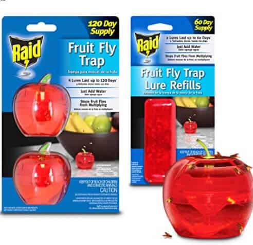 gnat trap apple